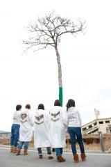 撮影=2011年11月13日・岩手県陸前高田市「奇跡の一本松」