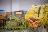 嵐・二宮和也が訪れた岩手県では「虎舞委員会」メンバーと会長岩間さんが見せてくれた迫力の「虎舞」。『嵐の明日に架ける旅 〜希望の種を探しに行こう〜』は3月28日放送(C)NHK