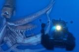 『NHKスペシャル』で『シリーズ 深海の巨大生物』放送決定(写真は合成です)(C)NHK