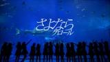 沖縄美ら海水族館でジンベエザメに大興奮!(「さよならクロール」MVより)