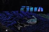 関東最大級のイルミネーションイベント『さがみ湖イルミリオン』内覧会の模様(神奈川『さがみ湖 プレジャーフォレスト』) (C)ORICON NewS inc.