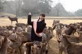 「奈良の鹿になりたいの〜」というほど鹿に慣れ親しんだ市川