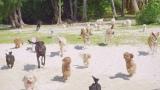たくさんの犬たちも登場(AKB48「ラブラドール・レトリバー」MVカット)