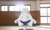 青山ワンセグ開発で実写化された、すもうねこ(CV:曙太郎)(C)NHK
