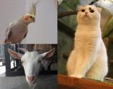 定番の猫カフェから小鳥、ヤギまで…バリエーション豊かに進化する動物カフェ (C)oricon ME inc.