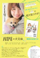ぱるるが愛犬と戯れる=主婦と生活社刊『AKBの犬兄妹』(6月30日発売)の表紙カット