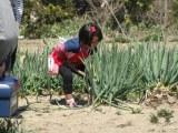 『畑の一本道』とその後 千葉県・南房総市(みなみぼうそうし)凛(りん)ちゃん 4歳 6か月(C)日本テレビ