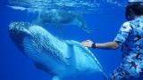 伊藤英明(右端)の目の前にクジラの親子が大接近!(C)CBC