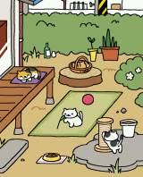 「にわさき」に集まる猫たち