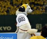 ソフトバンクホークス対西武ライオンズ戦の始球式に登場したお父さん犬 (C)ORICON NewS inc.