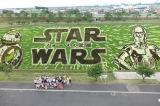 田んぼに見えないほど、完成度の高い『スター・ウォーズ/フォースの覚醒』田んぼアートが完成