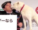 白戸家のお父さん犬とキスをしたダチョウ倶楽部の上島竜兵 (C)ORICON NewS inc.
