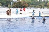 """京都水族館で披露された『爆笑!よしもとイルカパフォーマンス』でバンビーノのネタ""""ダンソン""""にイルカが挑戦(C)ORICON NewS inc."""