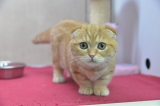 1月2日放送、BSジャパン『猫とコワモテ』かわいい猫がたくさん登場(C)BSジャパン