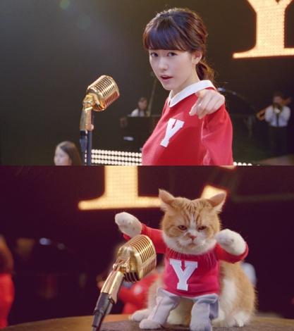 サムネイル 桐谷美玲とふてニャンがダンスする「Y!mobile」新CM