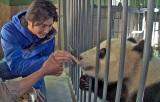 パンダ保護研究センターでパンダのエサやりに挑戦