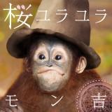 モン吉のソロデビュー曲「桜ユラユラ」ジャケット写真