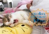 猫ショットには落書き付き(『たかみな撮!AKB48卒業フォト日記「写りな、写りな」』より)