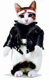 """暴走族風の衣装を着た""""なめ猫""""が80年代初頭に大ブームに"""