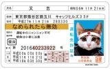 当時の子どもたちに人気を集めた「なめ猫免許証」