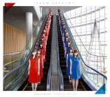 乃木坂46が2ndアルバム『それぞれの椅子』ジャケ写を公開(写真はType-A)