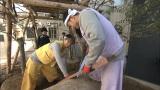 タレントのJOYがABC・テレビ朝日系『大改造!!劇的ビフォーアフター』(5月15日放送)に初参戦(C)ABC