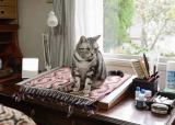 WOWOW『連続ドラマW グーグーだって猫である2 ?good good the fortune cat-』(6月11日スタート)に出演する猫たちのメイキングを集めたスペシャル動画を公開(C)WOWOW