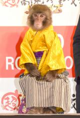 映画『超高速!参勤交代 リターンズ』完成報告会見に出席した猿の菊千代 (C)ORICON NewS inc.