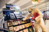 HMVの『UMA』コーナーに立ち寄る雪男コムアイ