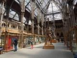 オックスフォード大学自然史博物館(C)ORICON NewS inc.