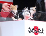 キュートな「なめ猫」も登場=Y!mobile『Android One』発売記念イベント (C)ORICON NewS inc.