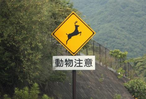 車で野生動物にぶつかってしまったら、どう対処すればいいのか? 前もって頭に入れておこう