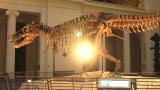 ティラノサウルス骨格全身(C)NHK