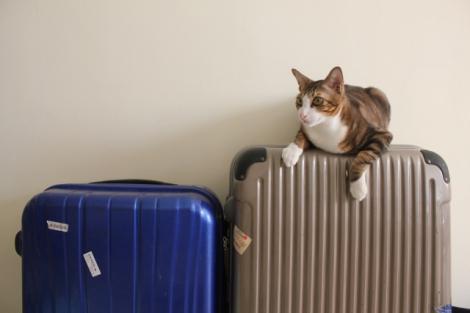 計画的に留学準備を進めるなら、半年前から始めるのがオススメだ