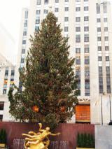 ロックフェラー・センターの巨大なクリスマスツリー