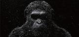『猿の惑星:大戦記(グレート・ウォー)』は2017年公開 (C) 2016 Twentieth Century Fox Film Corporation