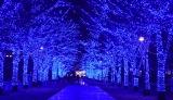 22日より代々木公園内のケヤキ並木で展開される『青の洞窟SHIBUYA』の様子(C)oricon ME inc.