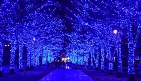 サムネイル 22日より代々木公園内のケヤキ並木で展開される『青の洞窟SHIBUYA』の様子(C)oricon ME inc.