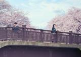 原作の装丁そのまま。桜の木のもとに佇む桜良(浜辺美波)と【僕】(DISH//北村匠海)の劇中カット(C)2017「君の膵臓をたべたい」製作委員会