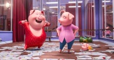 『SING/シング』 は3月17日公開 (C)Universal Studios.