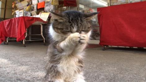 2月17日放送、テレビ東京系『超かわいい映像連発!どうぶつピース!!』より。看板猫に密着(C)テレビ東京