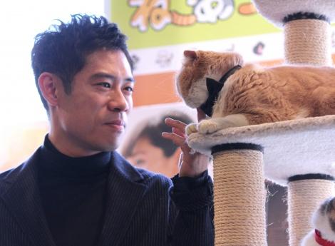 猫に癒される伊藤淳史=映画『ねこあつめの家』試写会イベント (C)ORICON NewS inc.