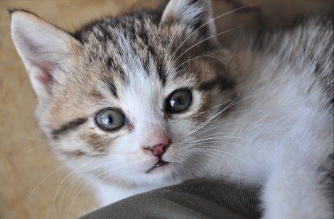 3月3日放送、テレビ東京系『超かわいい映像連発!どうぶつピース!!』より。観光牧場を救った保護猫(C)テレビ東京