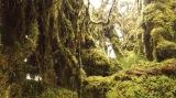 『世界遺産』放送1000回スペシャルより南米・エクアドルの世界遺産・サンガイ山の雲霧林(C)TBS