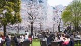 東京ミッドタウンの「MARTINI Blossom Lounge」