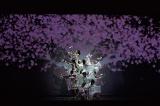 訪日外国人旅行客向けに、16年9月より上演中の「SAKURA -JAPAN INTHE BOX-」