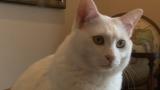 4月21日放送、テレビ東京系『超かわいい映像連発!どうぶつピース!!』より。SNSで話題の「無重力猫」が登場(C)テレビ東京