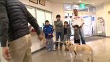 BSジャパン『まさはる君が行く!ポチたまペット大集合』5月9日放送は「密着1年・盲導犬ストーリーお別れスペシャル」。そして、ついにお別れのときが…(C)BSジャパン