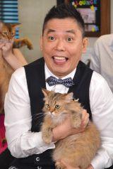 フジテレビ系『爆笑問題の超!ネコ学 猫、知ってるつもり?』の会見に出席した爆笑問題の太田光 (C)ORICON NewS inc.