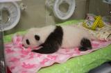 すくすくと育っています(公財)東京動物園協会